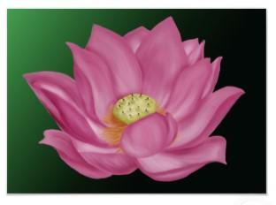 lotus_blossom