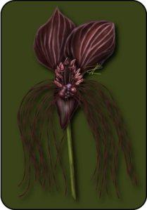 batflower